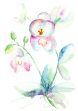 Orquídea hermosa, ilustración de la acuarela Imágenes de archivo libres de regalías