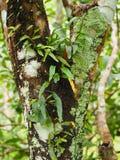 Orquídea na árvore Fotos de Stock Royalty Free