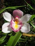 Orquídea na exploração agrícola fotografia de stock royalty free