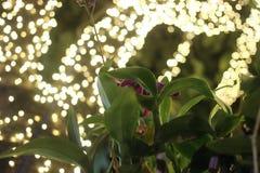 Orquídea na noite Imagens de Stock