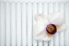 Orquídea no filtro Imagem de Stock