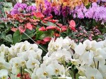 Orquídea no jardim fotografia de stock royalty free
