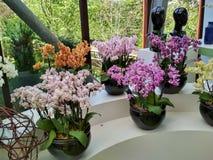 Orquídea no jardim Imagens de Stock