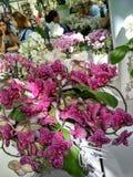 Orquídea no jardim foto de stock royalty free