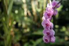 Orquídea no jardim Imagem de Stock