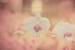 Orquídea no papel velho do grunge Fotografia de Stock Royalty Free