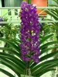 Orquídea no potenciômetro foto de stock