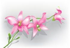 Orquídea púrpura stock de ilustración