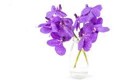 Orquídea púrpura aislada de Vanda, orquídea violeta en una botella fotos de archivo libres de regalías