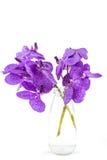 Orquídea púrpura aislada de Vanda, orquídea violeta en una botella imagen de archivo