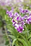 Orquídea púrpura con profundidad baja Fotos de archivo
