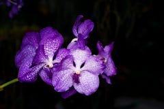 Orquídea púrpura dejada Imagen de archivo libre de regalías