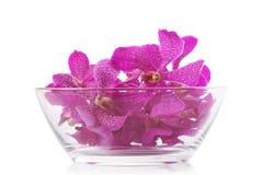 Orquídea púrpura en el tazón de fuente de cristal Imagen de archivo libre de regalías