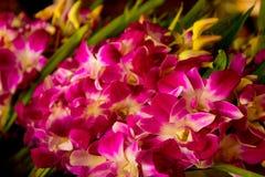 Orquídea púrpura para la adoración Imagenes de archivo