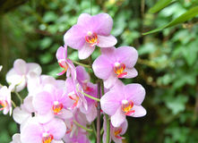 Orquídea púrpura rosada imágenes de archivo libres de regalías