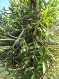 Orquídea - planta Imagen de archivo libre de regalías