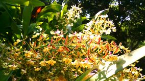 Orquídea rara Imágenes de archivo libres de regalías