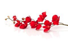Orquídea roja Fotos de archivo