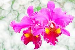 Orquídea roja Foto de archivo libre de regalías