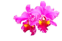 Orquídea roja Fotografía de archivo