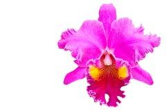 Orquídea roja Imagen de archivo