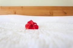 Orquídea roja en el fondo blanco Badroom de la decoración Foto de archivo libre de regalías