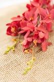 Orquídea roja en la arpillera foto de archivo