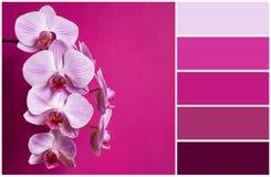 Orquídea rosada (alette de colores) Fotografía de archivo libre de regalías