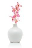 Orquídea rosada en el florero blanco Fotos de archivo libres de regalías