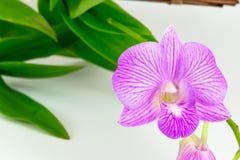 Orquídea rosada en el fondo blanco Fotografía de archivo libre de regalías