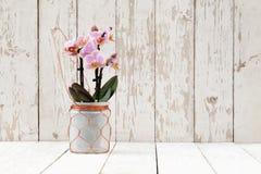Orquídea rosada en el pote de cristal, en tablones de madera Imágenes de archivo libres de regalías