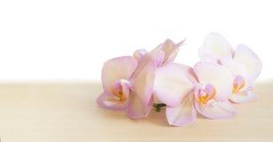 Orquídea rosada en una tabla de madera Fotos de archivo libres de regalías