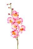 Orquídea rosada hermosa aislada en blanco Imagen de archivo libre de regalías