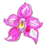 Orquídea rosada hermosa en el fondo blanco Foto de archivo