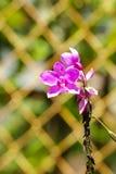 Orquídea roxa agradável com a cerca no fundo Imagens de Stock