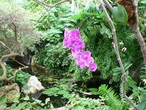 Orquídea roxa pela lagoa Fotos de Stock Royalty Free