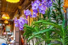 Orquídea, roxo e branco Fotos de Stock