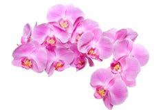 orquídea sobre blanco Foto de archivo libre de regalías