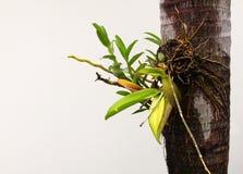 Orquídea tropical Fotografía de archivo