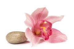 Orquídea tropical com uma pedra para uns termas Imagens de Stock