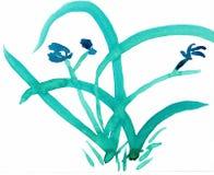 Orquídea - um dos quatro cavalheiros - desenho da tinta Fotos de Stock