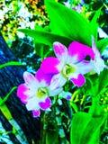 Orquídea vermelha do verão da flor fotografia de stock