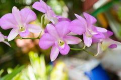 Orquídea violeta Fotografia de Stock Royalty Free