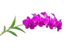 Orquídea violeta Imagem de Stock