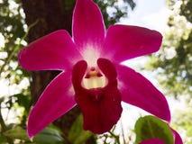 Orquídea violeta Foto de archivo