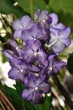 Orquídea violeta na selva Foto de Stock