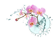 Orquídea y agua Foto de archivo libre de regalías