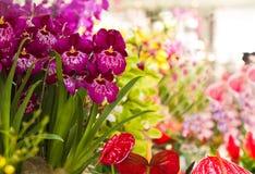 Orquídea y Anthuriumflowers Fotografía de archivo