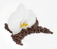 Orquídea y café fotografía de archivo libre de regalías