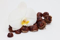 Orquídea y castañas fotos de archivo